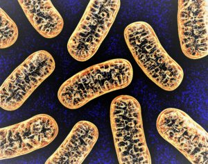 "(Re)Discover Mitochondria – the ""Power Generators"" that provide energy to each human cell"